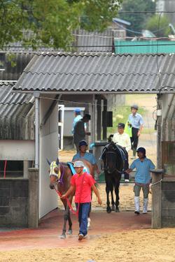 Arao_race_park_20110930_006