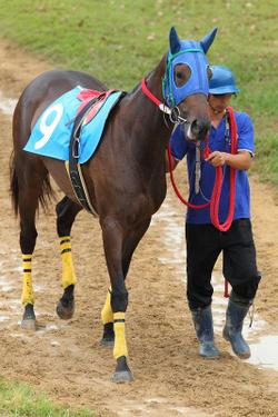 Arao_race_park_20110930_007