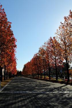Hanshin_20111204_002